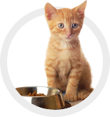 Cat Food and Treats/Toys